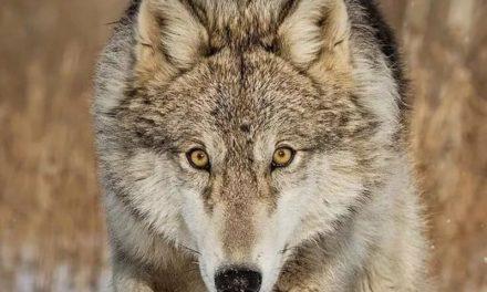 Гнев: как победить в себе зверя