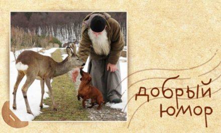 Про грехи отца фарисея и покаявшегося кота