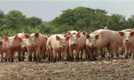 О свиньях, диаволе и нас самих