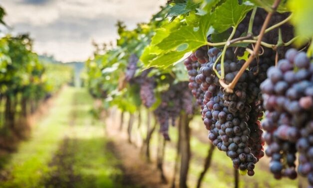 Что значит притча о злых виноградарях